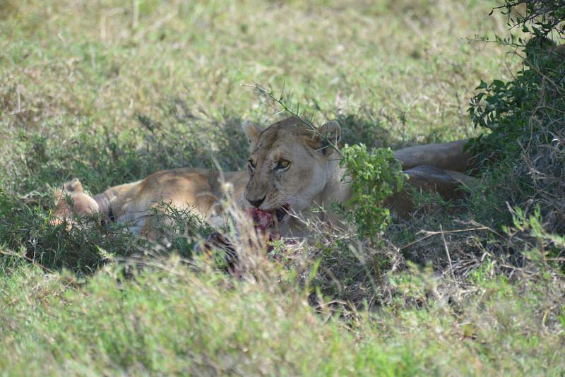 East Africa Safari 319.jpg