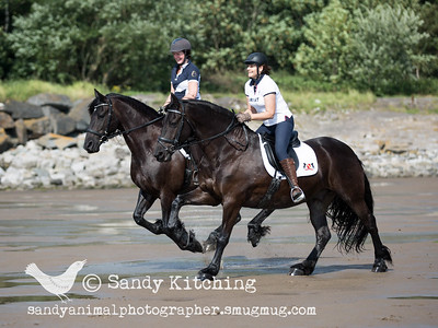 Colette & Hayley Friesian Experience Aug 2015