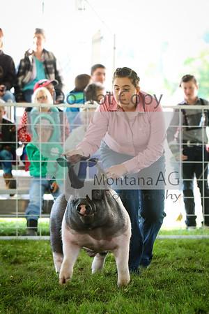 2019 Park County Fair