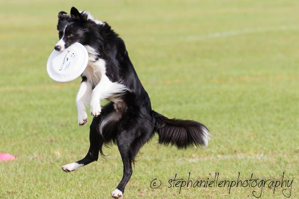 _MG_2382Up_dog_International_2016_StephaniellenPhotography.jpg