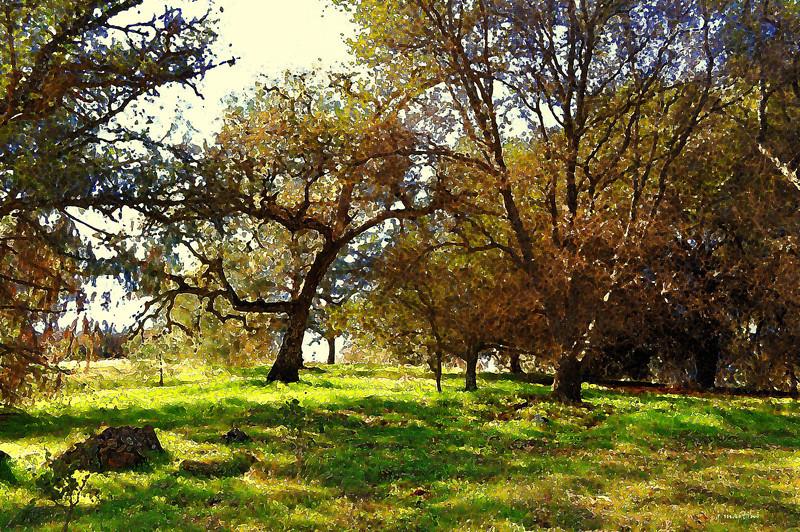 oak grove 3-6-2013.jpg