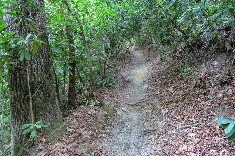 Starens Branch Trail -- 2,300'