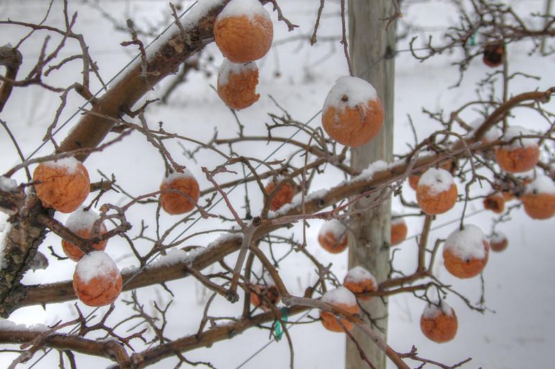 Easy Pickins Winter 019-1676784668-O.jpg