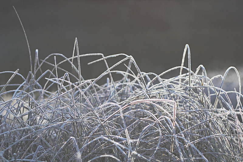 Frost covered grass, near Lake Catani.