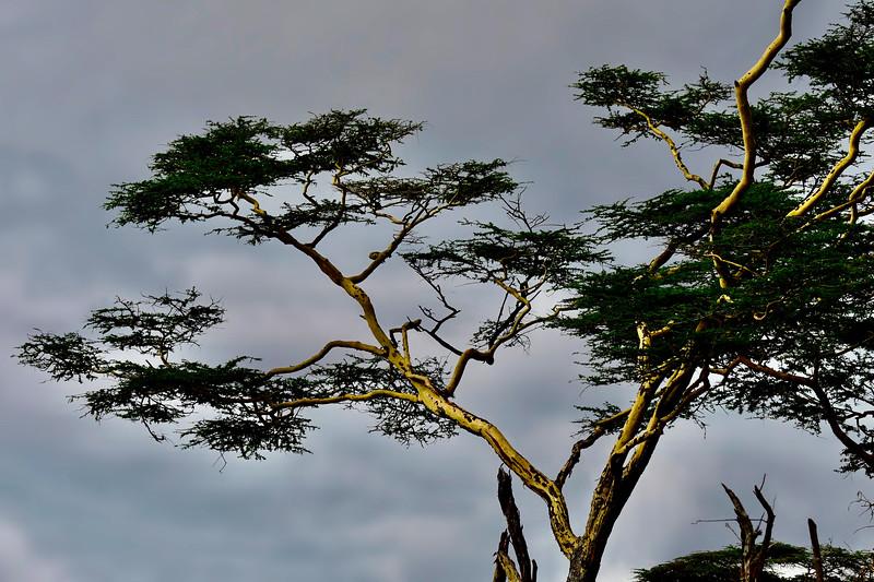Kenya - 2019