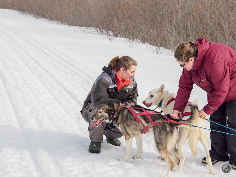 20190325_Blaire_and_Liz_Mushing_52.jpg