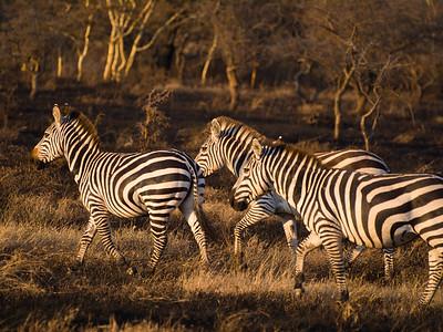 Animals Tanzania 2007