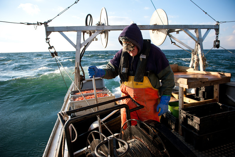 18. Shrimping with Proctor Wells, Gulf of Maine, February 2013.