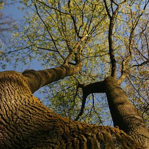 Au pied de mon arbre ...
