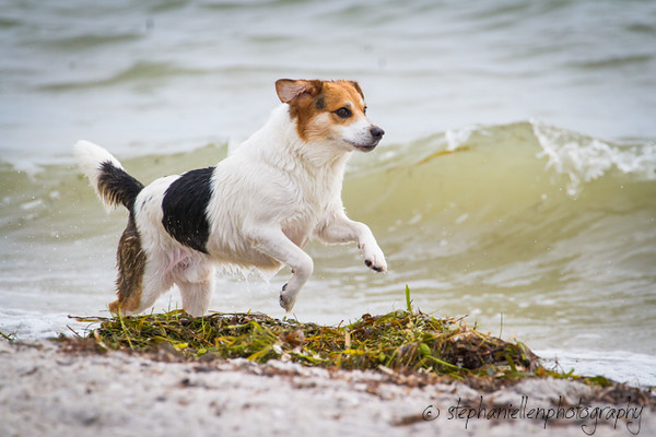 20141007dogs_fort_desoto_beach_Stephaniellenphotography.com-_MG_0022.jpg