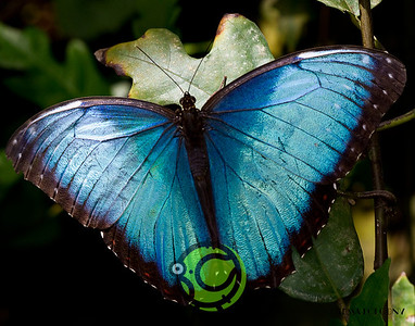 2010 Butterflies