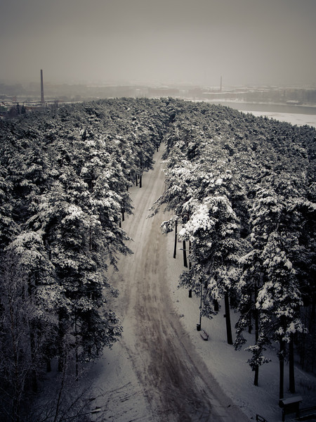 tampere forest view3.jpg
