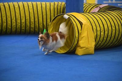 Lower Bucks Dog Training Club AKC Agility Trial May 20