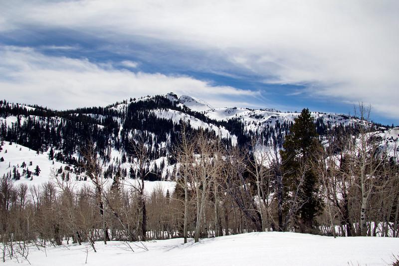 winter aspens.jpg