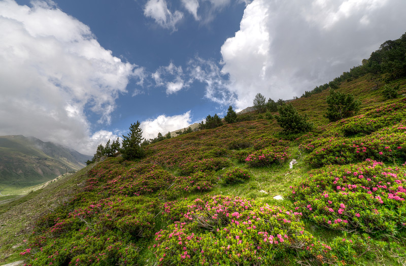 Colorful meadow in the Pyrenees Mountains in Vall de Nuria, Spain
