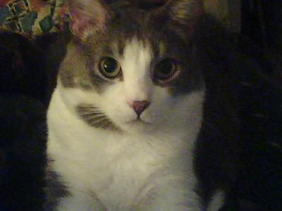 Mis gatos, mes chats, my cats