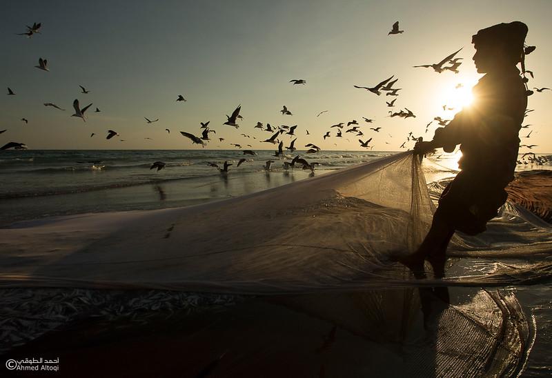 Sardine Season (25)- Dhofar.jpg