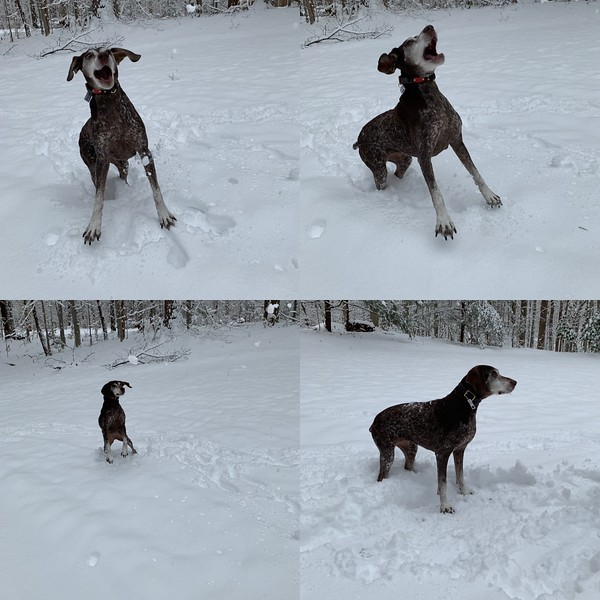 2019.01.13 - Morgen trying to catch snowballs.JPG