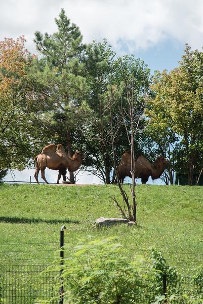 Syracuse Zoo August 2020-19.jpg
