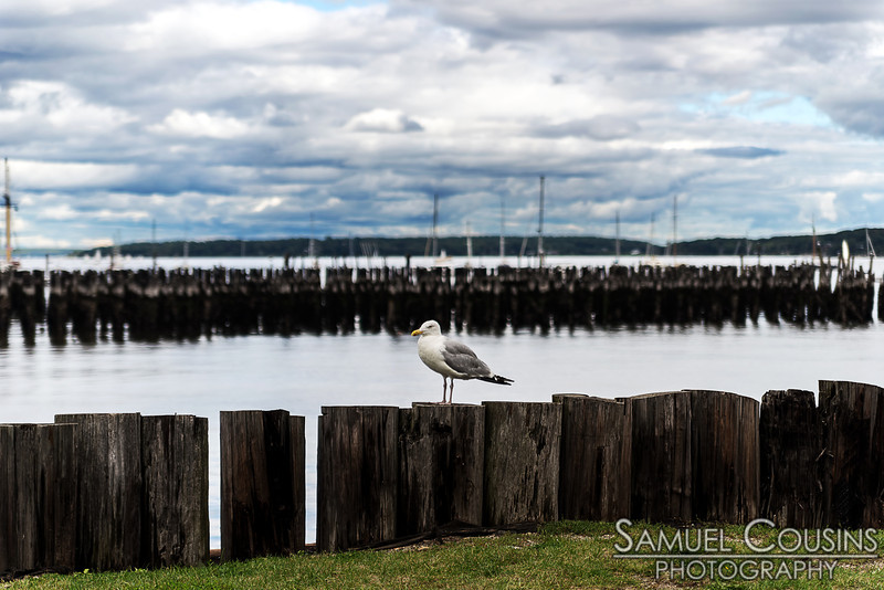 This herring gull was trying to determine whether or not we had food.