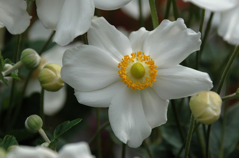Anemone (14).jpg