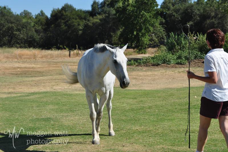 EB&Horses-065.jpg