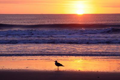 Virginia Beach Birds Sunrise Ship