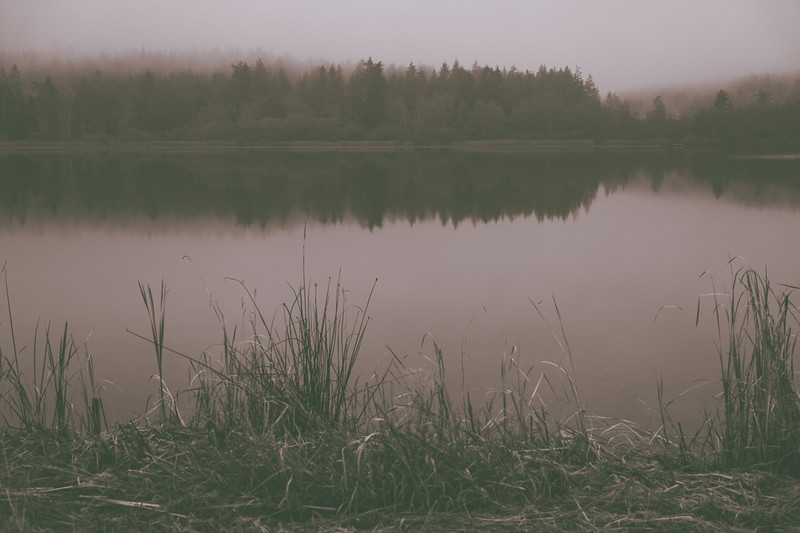 Trees on the opposite side of a quiet Hummel Lake reflect into the water on a foggy morning.