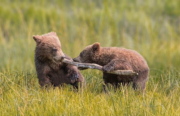 Wildlife and Their Young