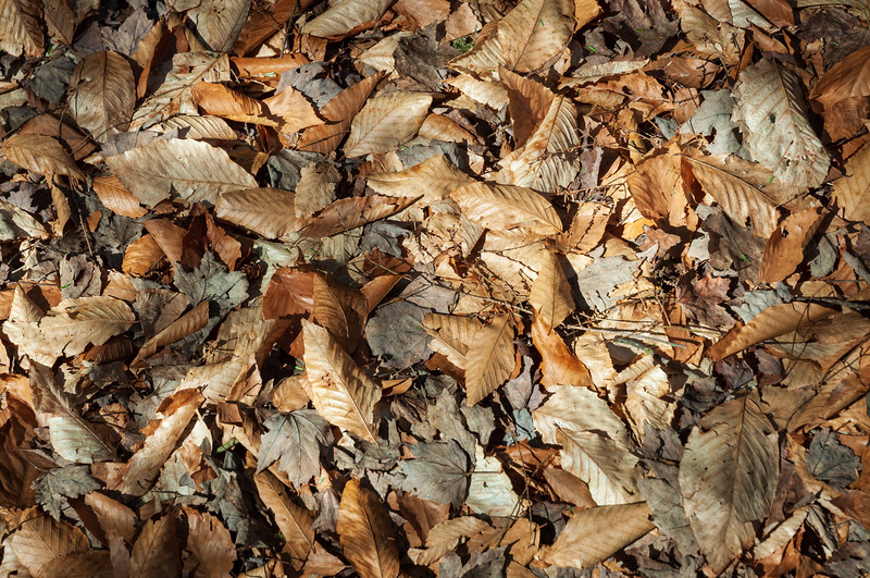 Texture of Autumn Leaves at Allegheny National Forest