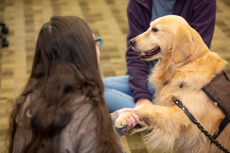 Therapy Dogs Sassy-7154.jpg