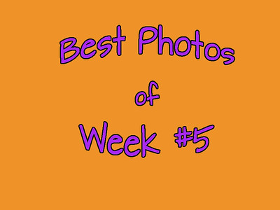 Photogs Best of the Week #5