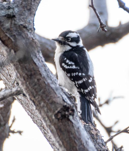 Arboretum Spring Bird bwm-8 - Copy.JPG