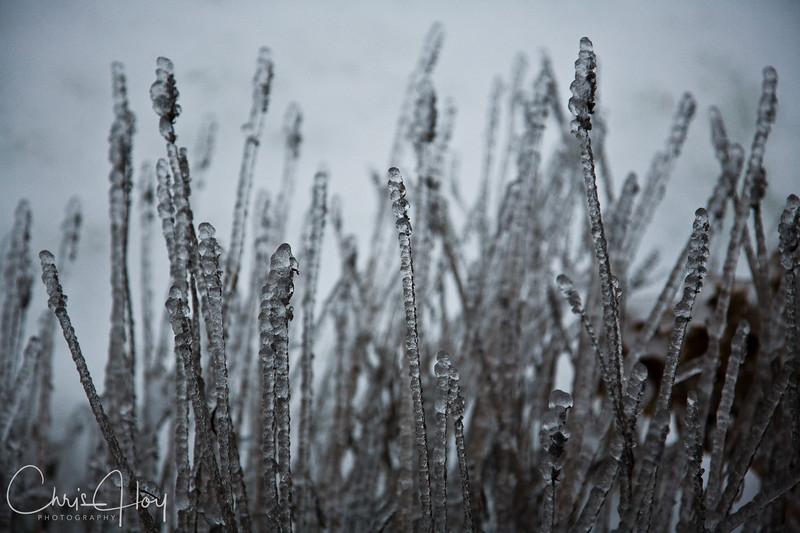 Freezing Rain on the Lavender