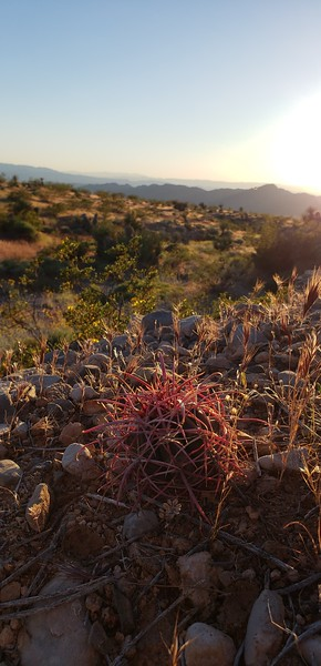 Nevada - Gold Butte