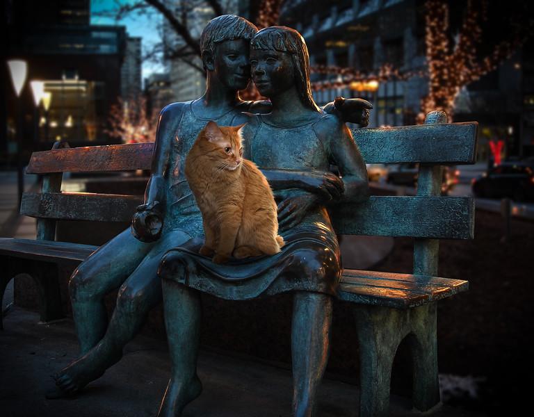 loved-cat-lr.jpg