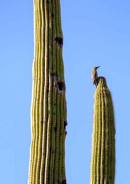Tucson_17-787.jpg
