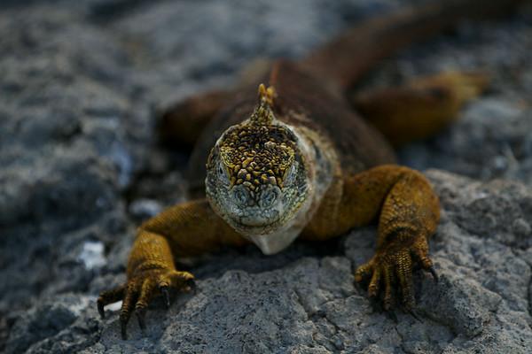 Galapagos 2014