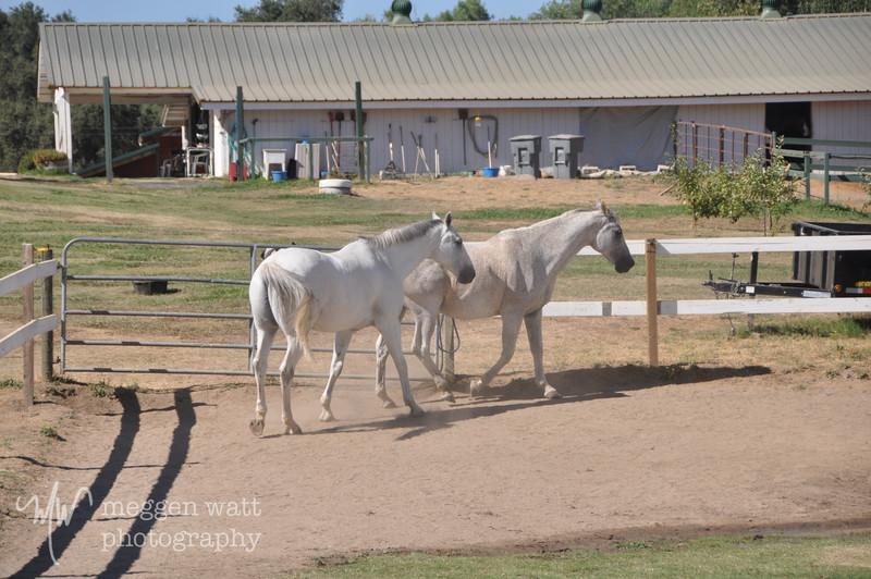 EB&Horses-093.jpg
