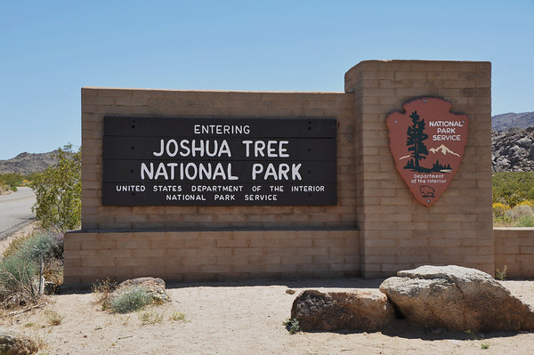 Joshua Tree May 2010