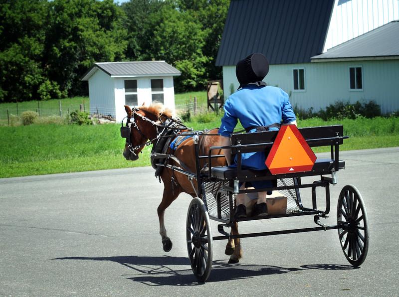 09 Amish buggy rider .Dalton-Roper _9358.jpg