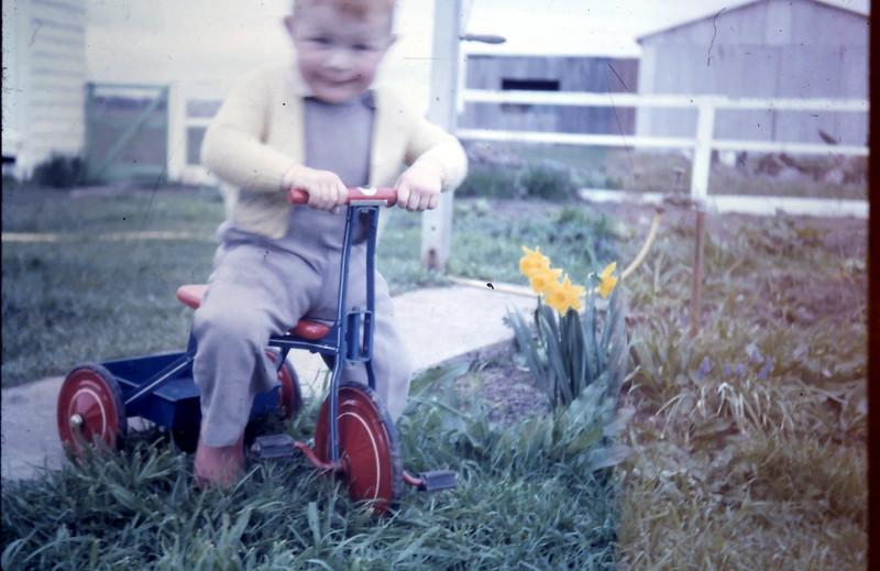 1965-8-28 (21a) David 20 mths.JPG