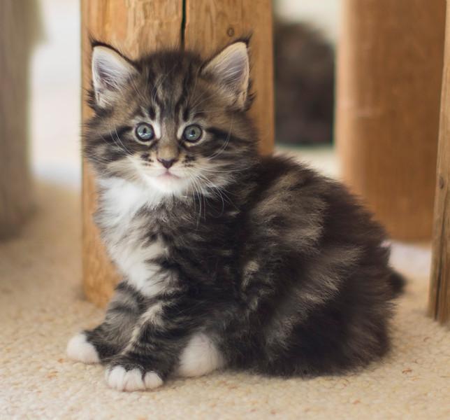Kittens294.jpg
