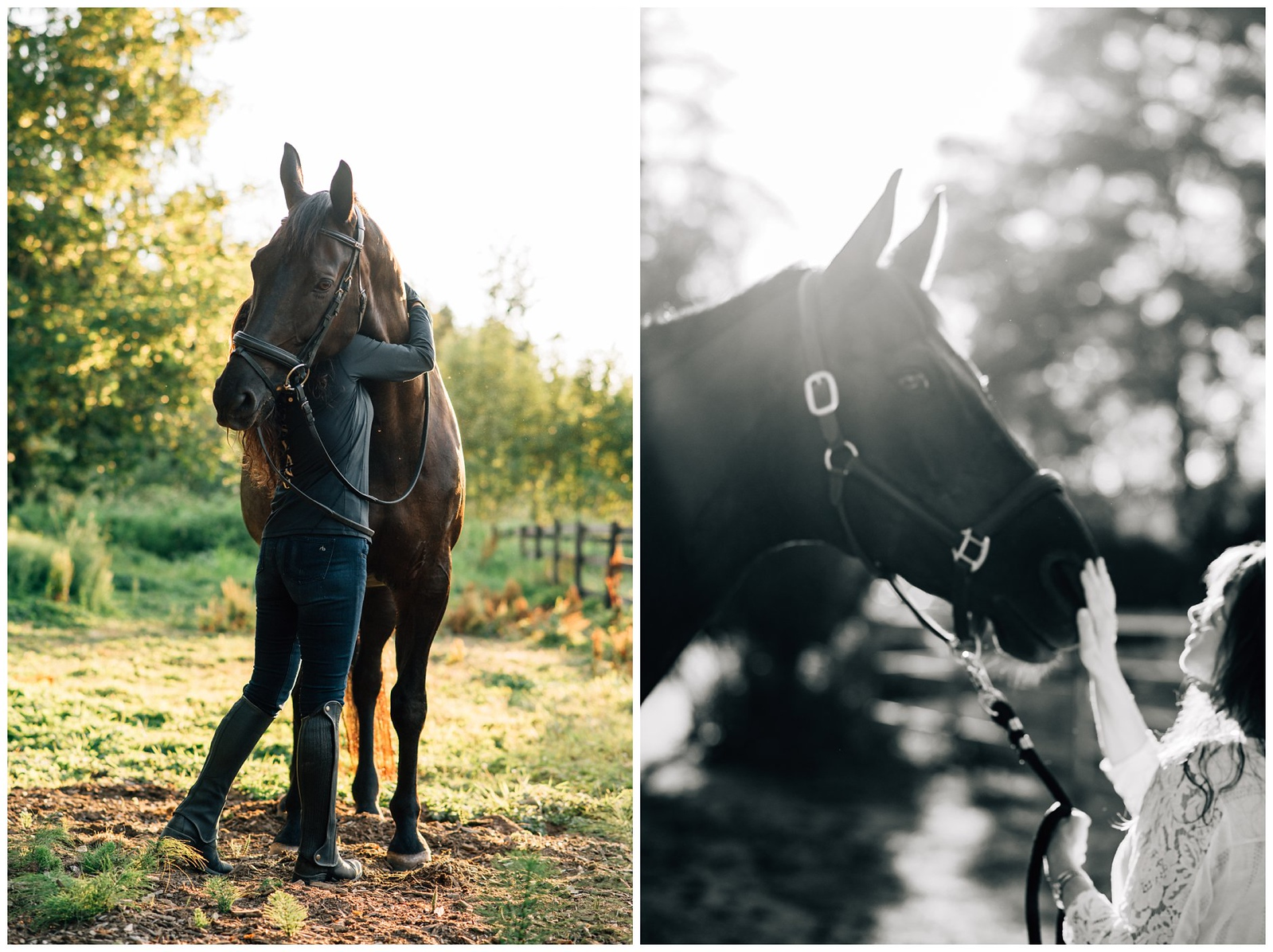langley horse portrait session