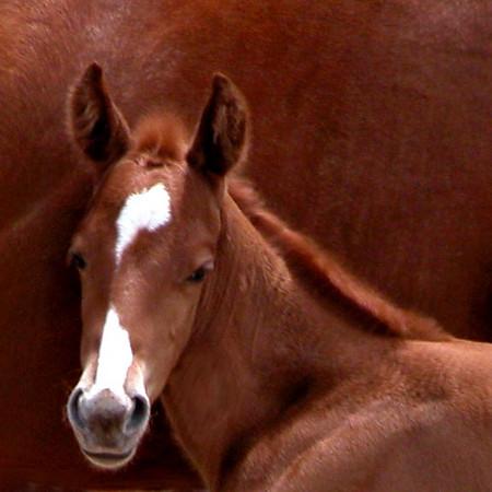 wht face foal face.JPG