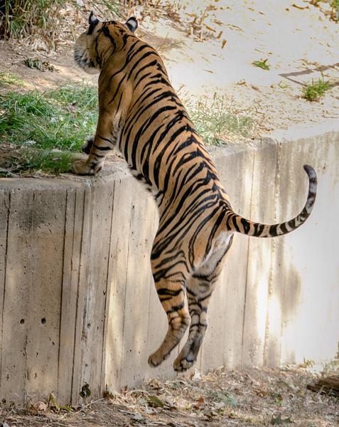 DC-Zoo-2013-2221.jpg