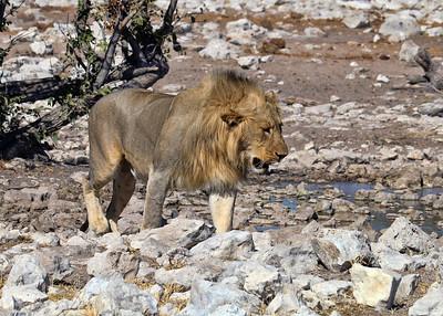 NAMIBIA - HALALI