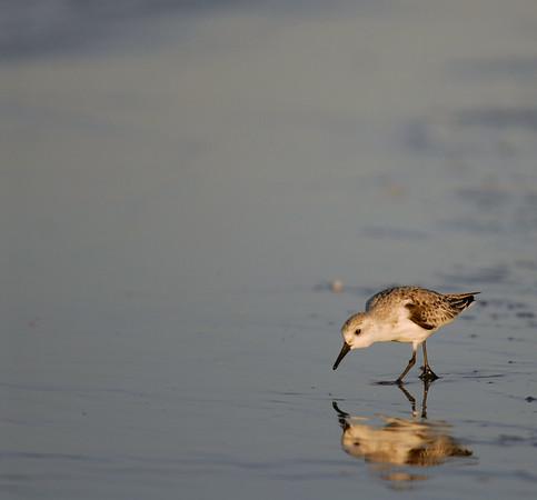 Georgia and South Carolina Birds