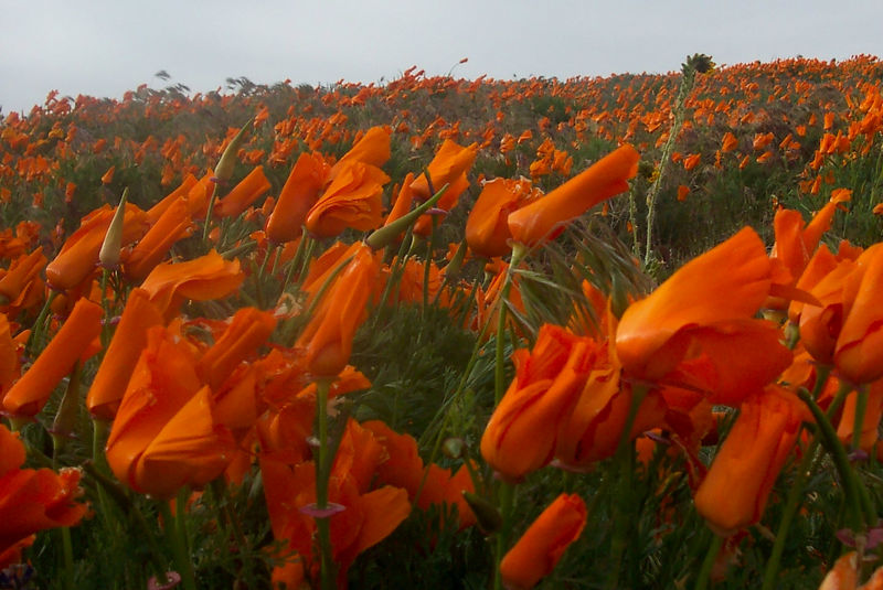 close and distand flowers.jpg