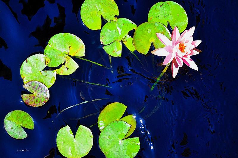 lilly pond 8-27-2013.psd